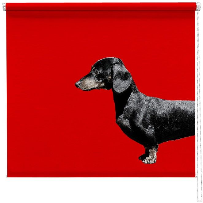 Dachshund Sausage dog red blind http://www.artylicious.co.uk/printed-blinds/animal-blinds/dachstund-sausage-dog-red-blind.html