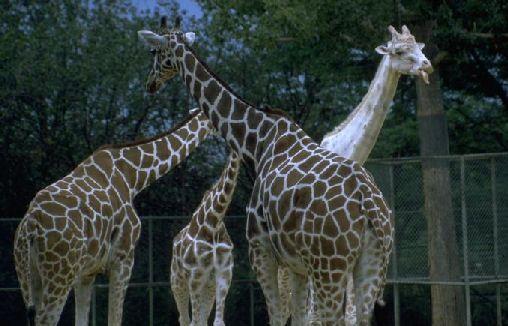 Zoo Theme Activities for Preschool PreK and Kindergarten