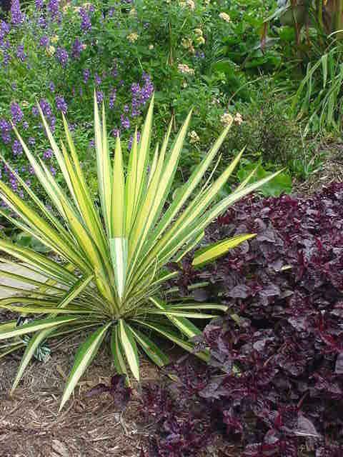 Best 25+ Yucca plant ideas on Pinterest | Yucca plant ...