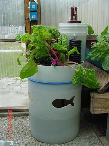 ... barrel aquaponics love the fish fish cut out on the barrel aquaponics