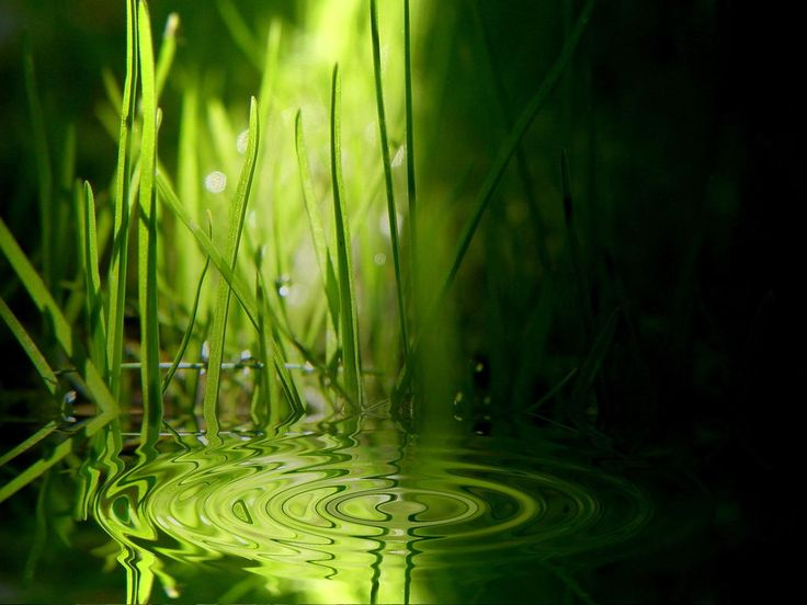 : Green Wallpapers, Water Plants, Backgrounds, Words Of God, Green Colors, Desktop Wallpapers, Allah, Photo, Black