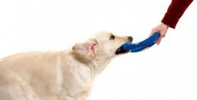 Pet insurance: Lots to chew on