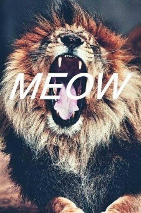 meow lion cat wild animal