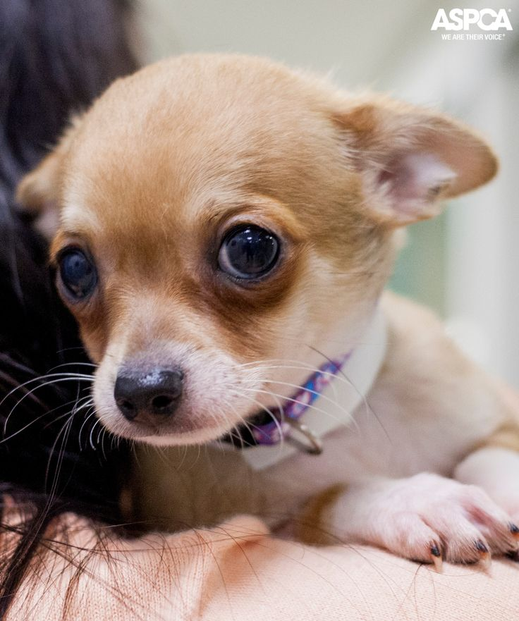 how to help a choking small dog