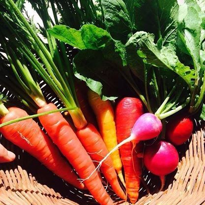 Find the freshest organic produce at our Deli