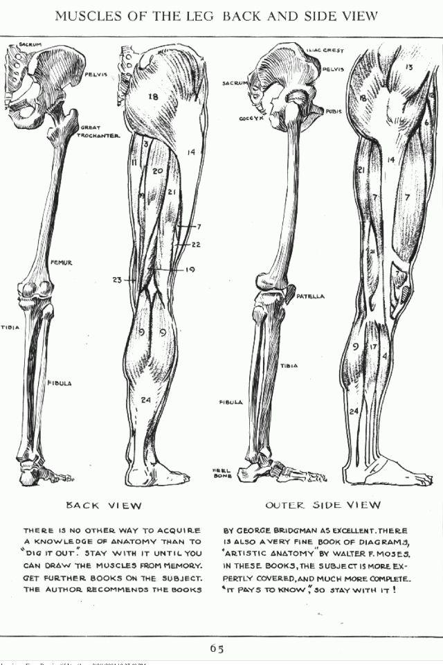 21 best human.skelleton images on pinterest | human anatomy, Skeleton