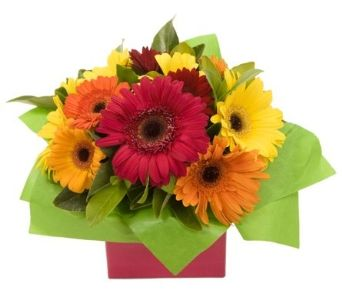 Bright and cheery box arrangement of mixed gerberas. Make someones day with colour!