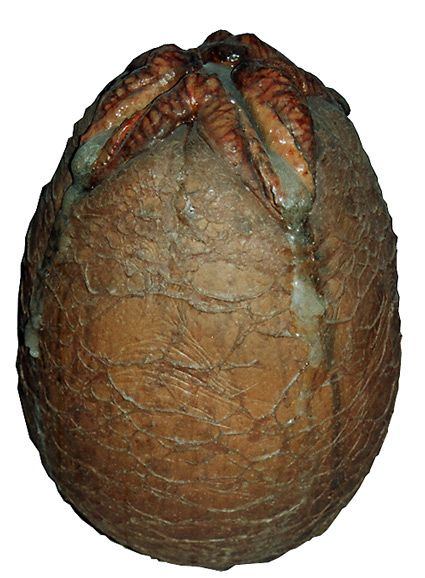 Xenomorph Egg 13 best images about [...
