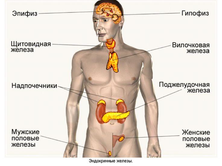 Сам себе врач: Железы внутренней секреции