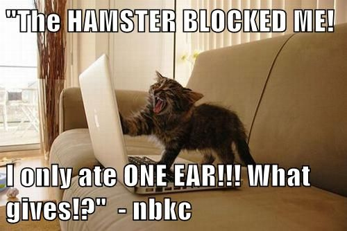 kitty's have online drama, too! http://sulia.com/my_thoughts/47b8ed46-c7df-41f0-b2b7-0f610b31ae4f/?source=pin&action=share&btn=small&form_factor=desktop&pinner=119686333