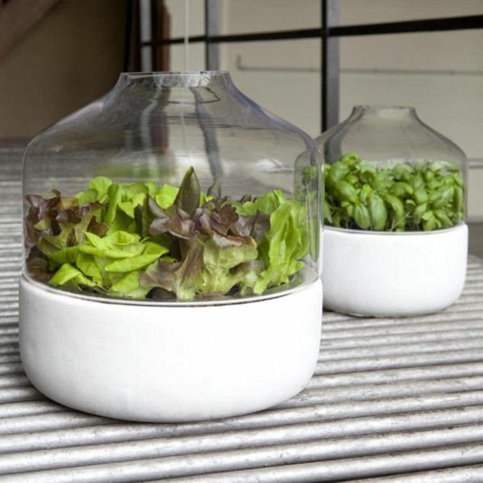 Dans une vase en verre vous pouvez créer un potager d'intérieur