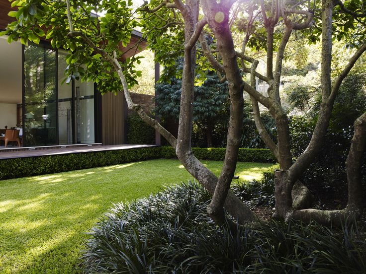 Ophiopogon jaburan and Buxus ground cover planting