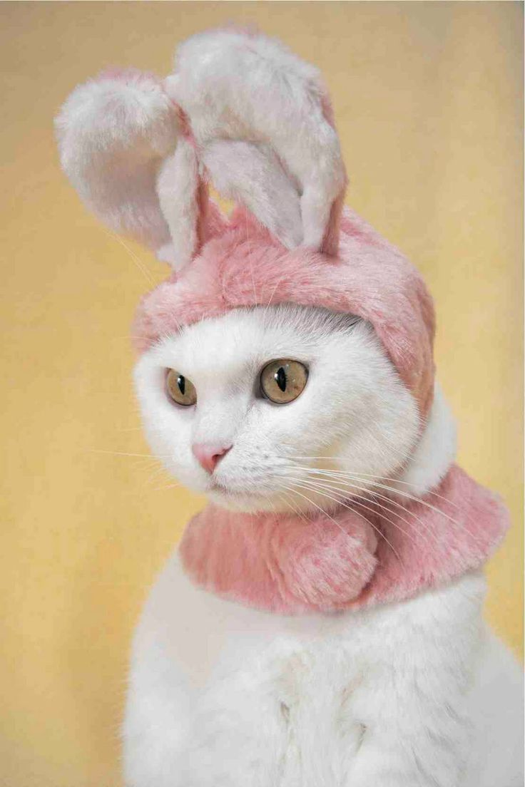 41 best images about easter cats on pinterest cats the