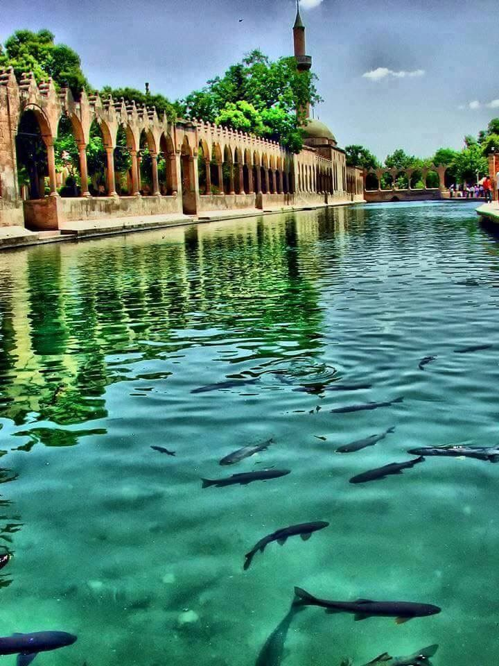 Şanlıurfa/Türkiye 🇹🇷 Balıklı göl,