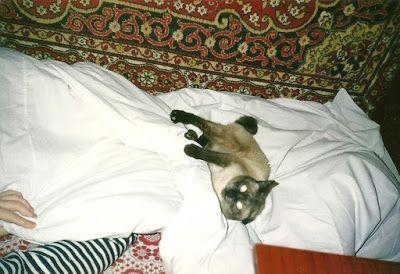 Забавные сказания о житии славного кота Маркиза (не то сказки, не то быль): !.Правдивые истории кота Маркиза 28 (сказки-истори...