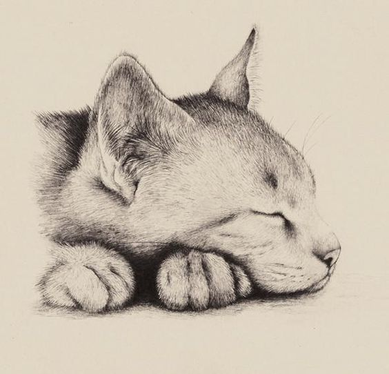 How to draw a cartoon sleeping cat