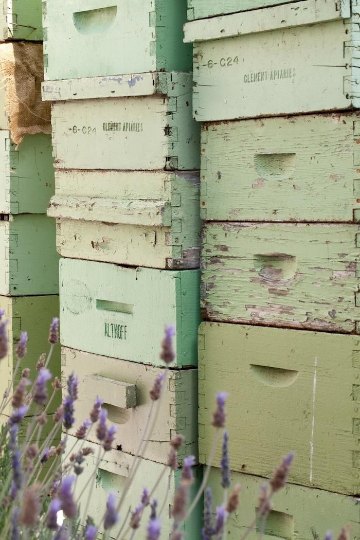 Honeybees welcome. Bee hives on  a secret roof garden at San Francisco's Fairmont Hotel,