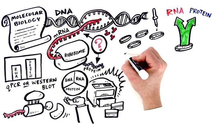 Bio-Rad - A Superior Method for Parallel Analysis of RNA and Protein Expression #voiceover #whiteboard #explainer #vobynophi #thedrawshop #biorad