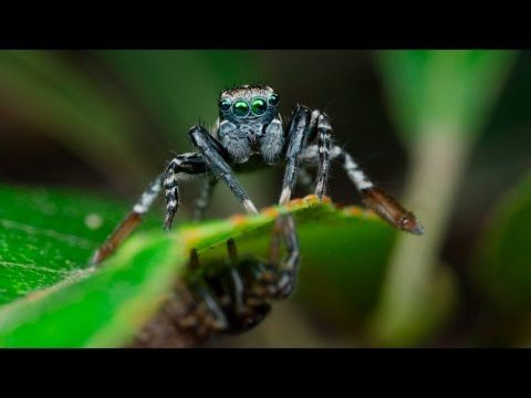 New spider species plays peek-a-boo to find the best mate | MNN - Mother Nature Network