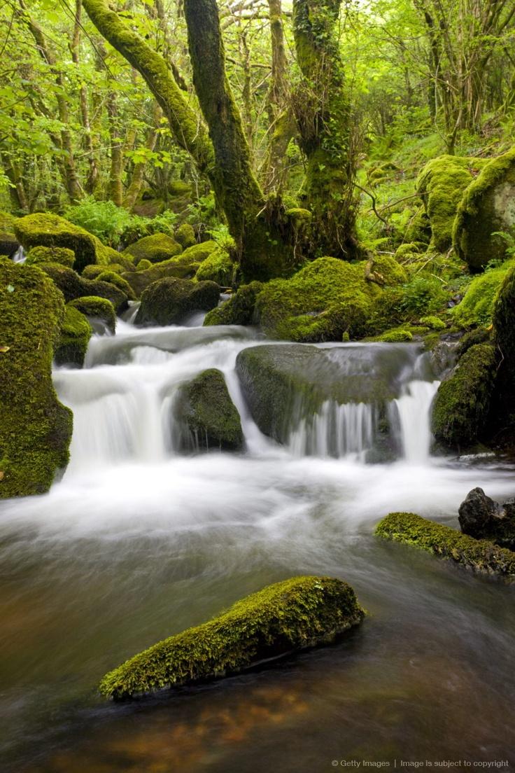 Stream rushing through a lush green mossy wood in Dartmoor National Park, Devon, England, United Kingdom, Europe