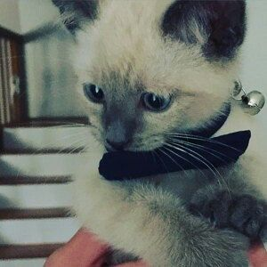 Adorable kitten gets all decked out!