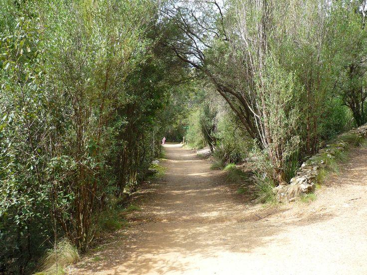 Walking path - Cataract Gorge