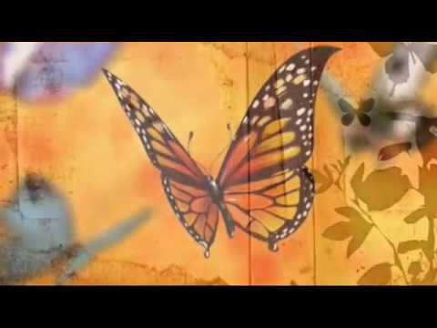 Get all these amazingly Butterfly Wallpaper.