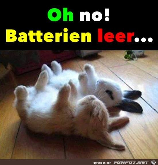 lustiges Bild 'Batterien sind leer.jpg'- Eine von 26358 Dateien in der Kategorie 'witzige Bilder' auf FUNPOT.