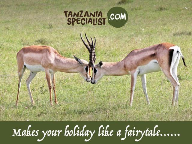 Tanzania Wildlife tour destination. To know more about Tanzania contact tanzaniaspecialist.