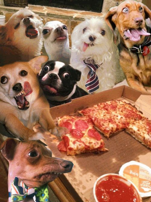 The ultimate pizza party. #imgur #gif #pizza