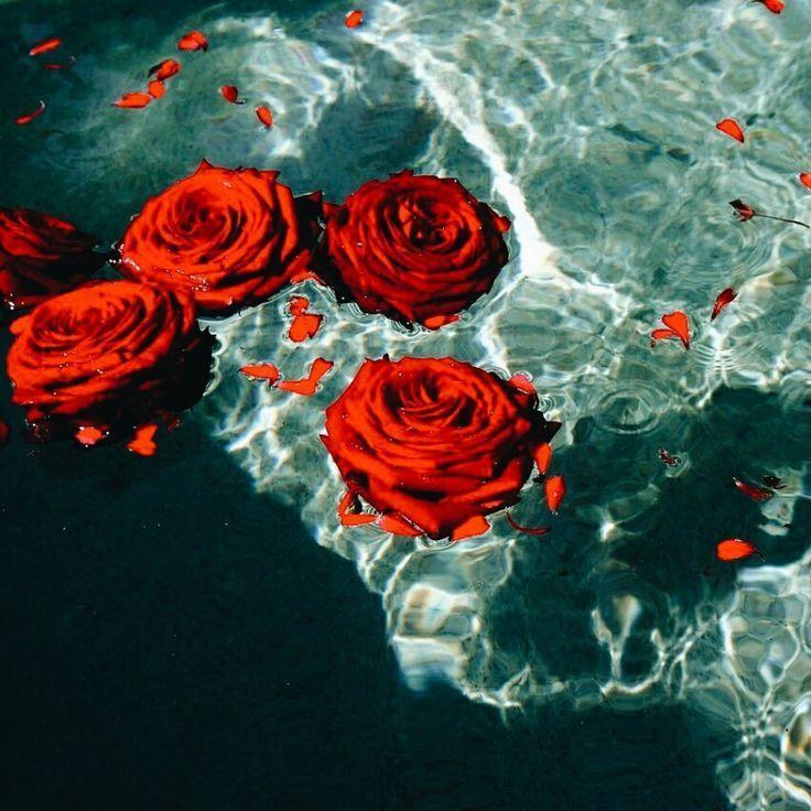 Vsco Art Red Roses Beautiful Pool Water Root Chakra Red