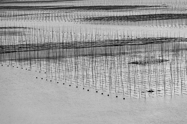 Book: Distant Song, China #aquaculture #fisherman #xiapu --- Livro: Distant Song, China