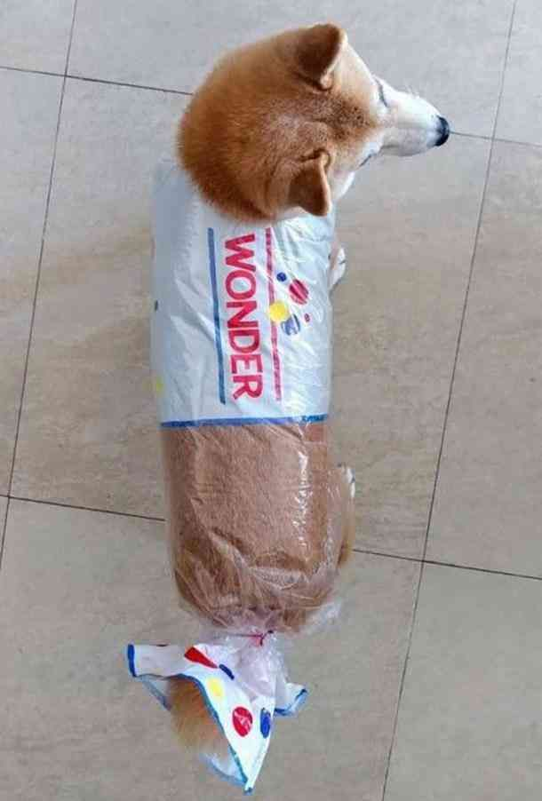 70 Best Funny And Punny Halloween Costumes Ideas For 2019 Pet
