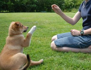 What Is The Best Dog Training Method? #DogTraining #PetClubIndia http://www.petclubindia.com/what-is-the-best-dog-training-method/