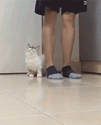 humorengif: I'll always be with you, hooman... - HighlandValley