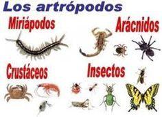 todos los tipos de artropodos