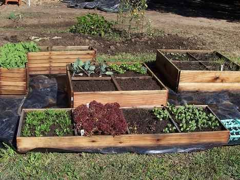 A guide to fall and winter organic gardening organic for Garden design winter 2018