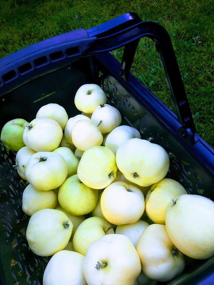 Just apples from our summer house garden. Taste lovely looks fabulous 👌💗