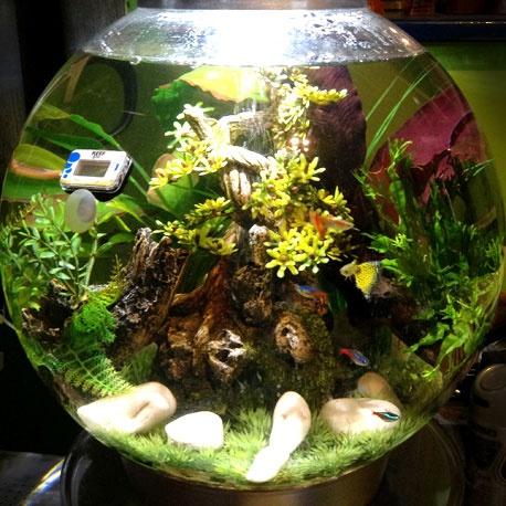 89 Best Biorb Aquarium Inspiration Images On Pinterest