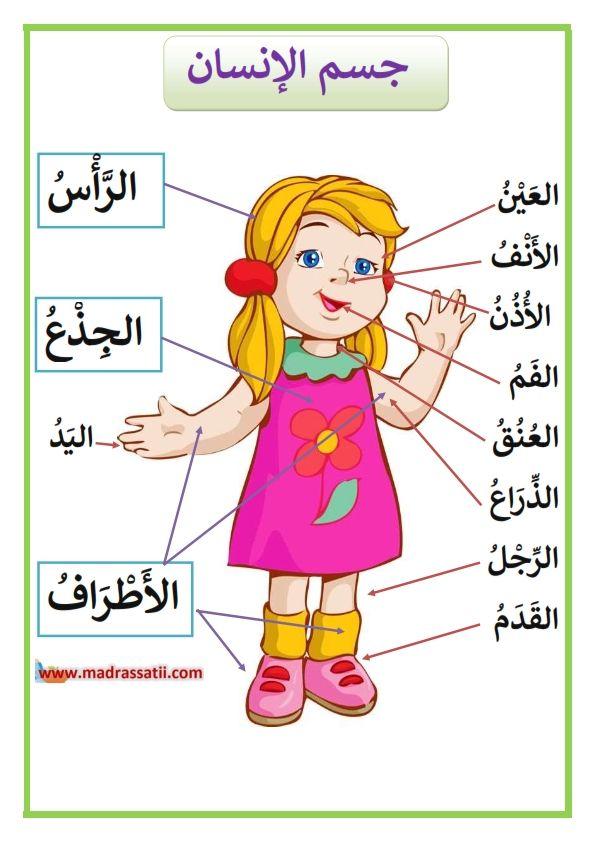 مكونات جسم الانسان الرأس و الجذع و الأطراف موقع مدرستي Arabic Alphabet For Kids Arabic Kids Learning English For Kids
