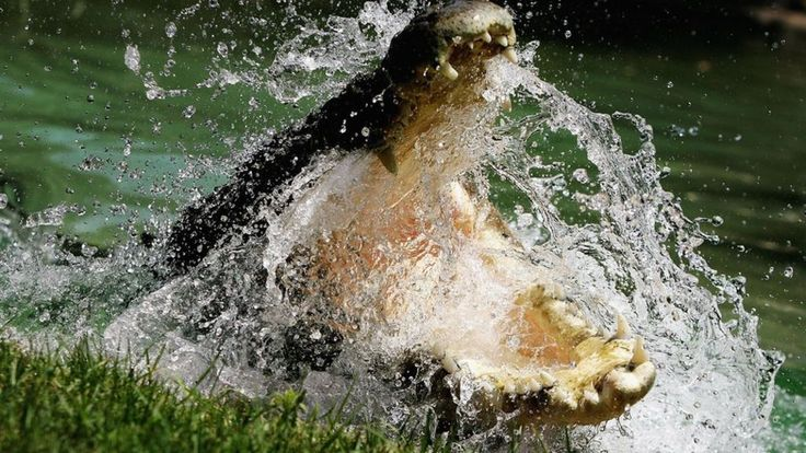 Man fends off crocodiles with tools after friend drowns