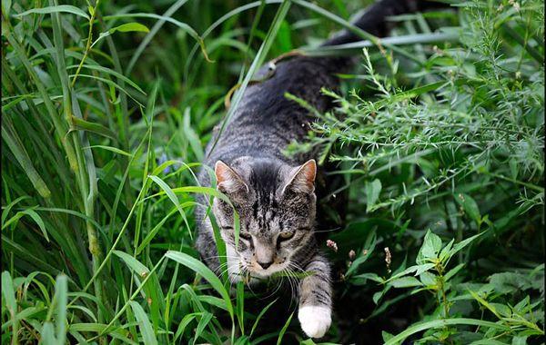 Katten, je houdt van ze of je haat ze! Er zijn enorm veel kattenliefhebbers in Nederland en we hebben veel plezier van onze lieve ...