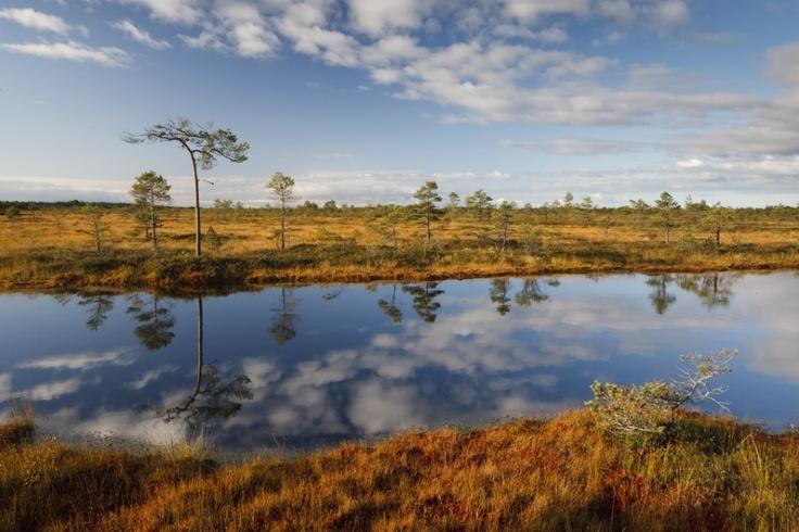 Bogland in Soomaa National Park  http://www.panparks.org/visit/our-parks/soomaa-national-park