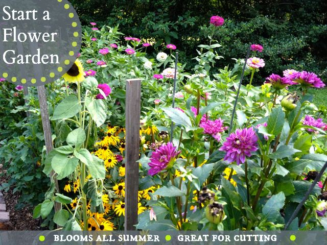 My favorite flowers for cutting! Colorful, easy-to-grow, flower garden that blooms all summer long!