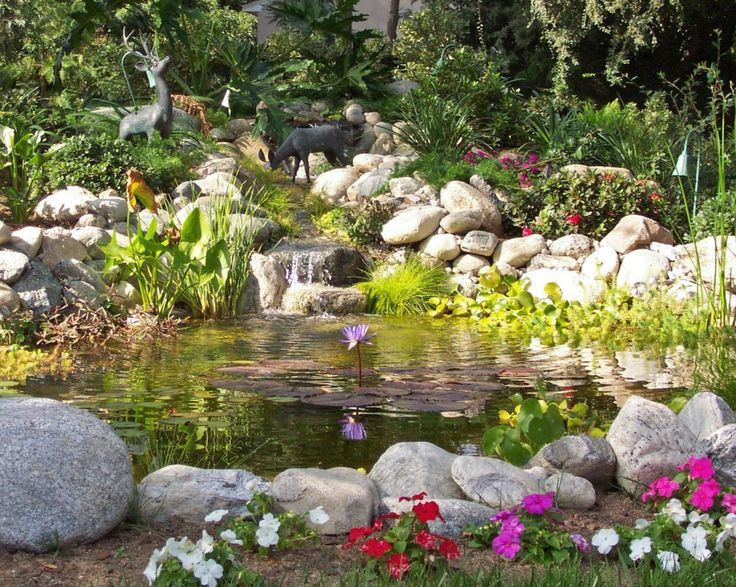 Organic ecosystem pond with fish turtles and frogs for Garden pond ecosystem