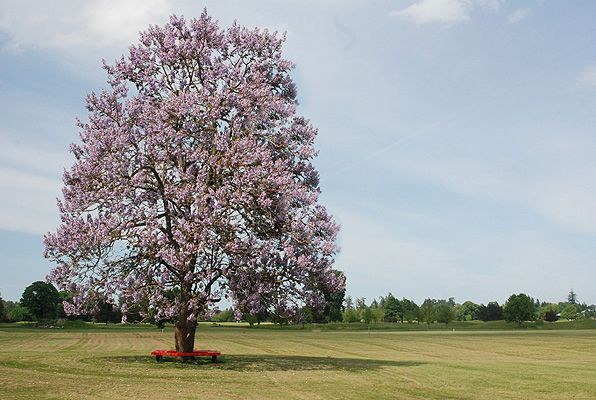 Royal Empress Trees Trees The O Jays And Shades