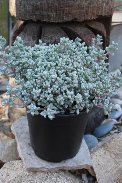 1000 ideas about wholesale succulents on pinterest special events bouquets and baby 39 s breath. Black Bedroom Furniture Sets. Home Design Ideas