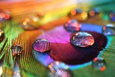macro: Peacock Feathers, Waterdrop, Rainbows Colors, Dew Drop, Raindrop, Dewdrop, Water Droplets, Peacock Colors, Rain Drop