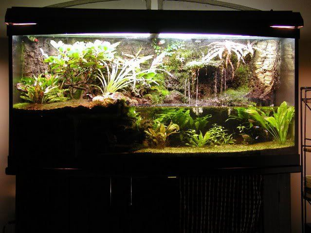 Paludarium For Poison Dart Frogs Aquariums Vivarium And