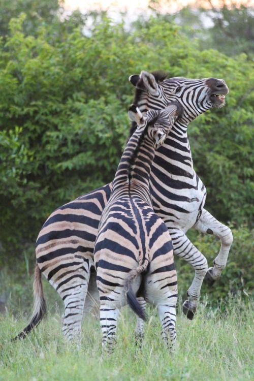 VIDA Foldaway Tote - Giraffes and zebra by VIDA 238rqF